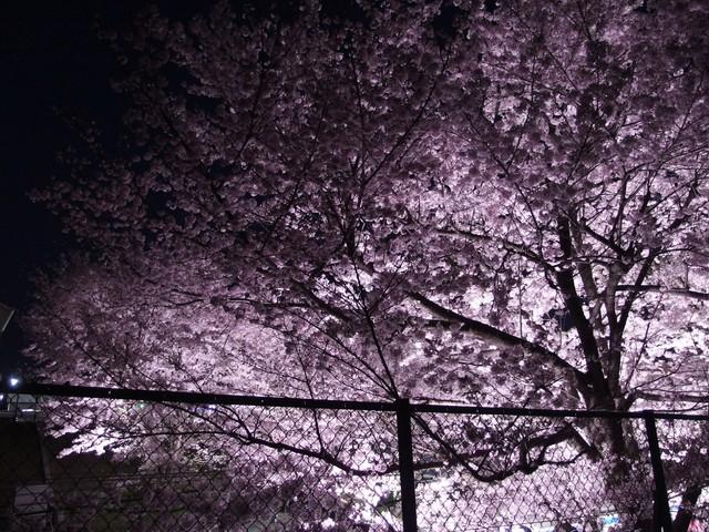 f:id:suijun-hibisukusu:20170421232129j:image