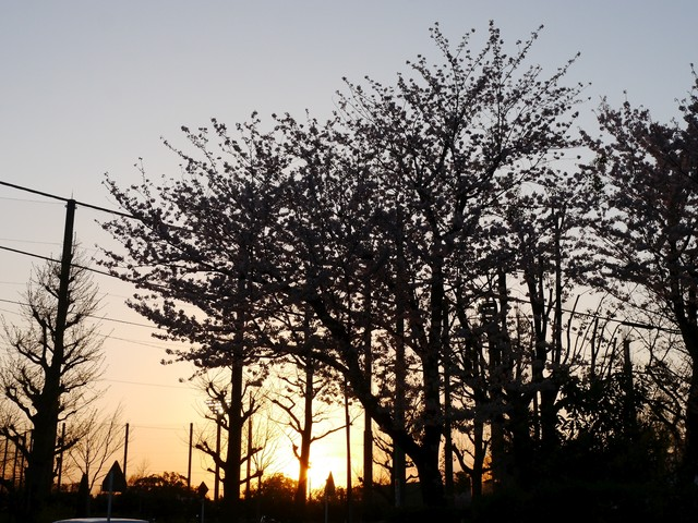 f:id:suijun-hibisukusu:20170421232130j:image