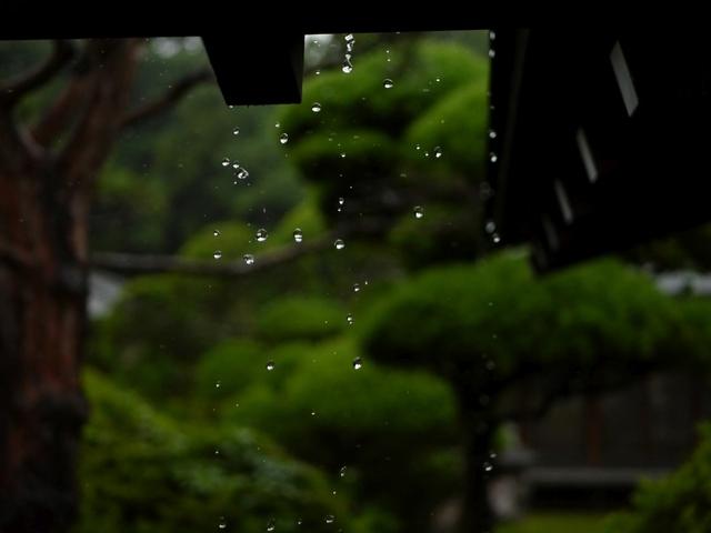 f:id:suijun-hibisukusu:20170629225459j:image