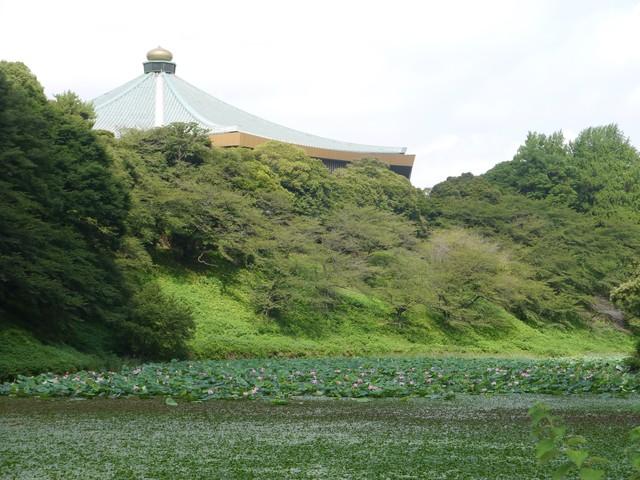 f:id:suijun-hibisukusu:20170805231228j:image