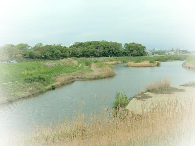 f:id:suijun-hibisukusu:20180419224956j:image