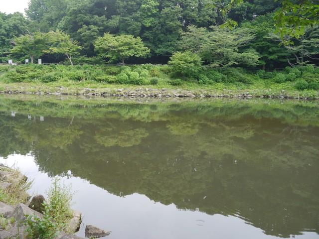 f:id:suijun-hibisukusu:20180523233404j:image