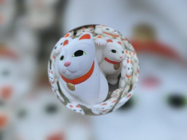 f:id:suijun-hibisukusu:20181010222725j:image