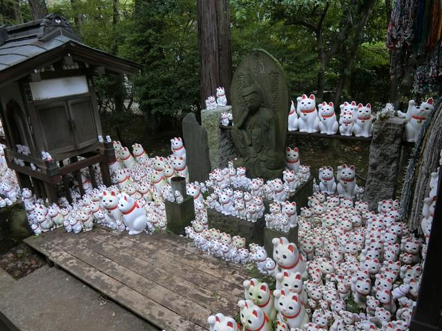 f:id:suijun-hibisukusu:20181010222743j:image
