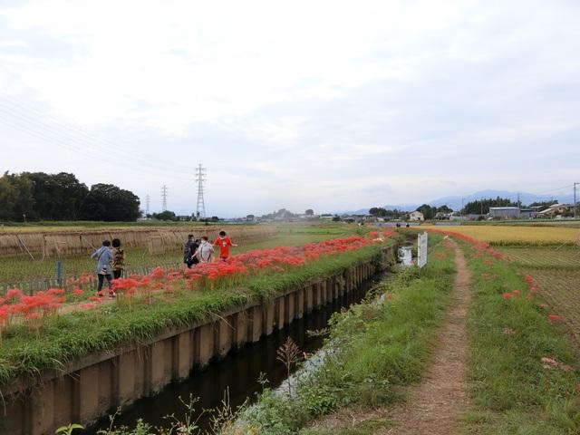 f:id:suijun-hibisukusu:20201021131953j:plain