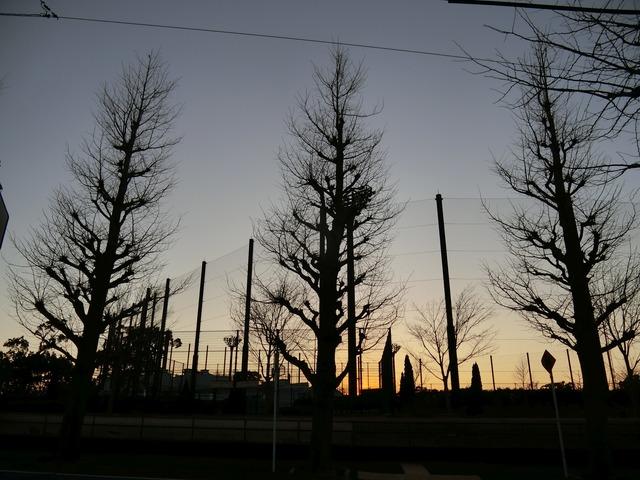 f:id:suijun-hibisukusu:20210213222842j:plain