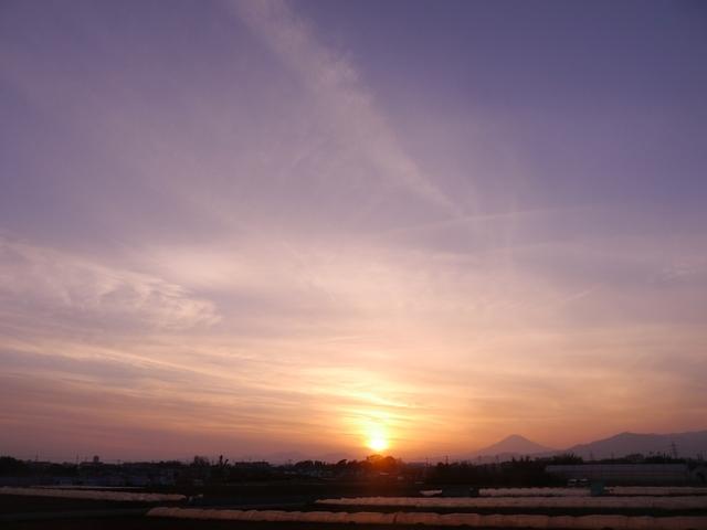 f:id:suijun-hibisukusu:20210225223348j:plain