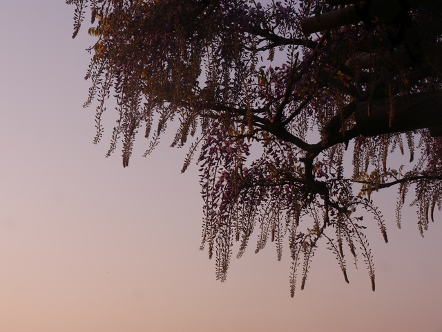 f:id:suijun-hibisukusu:20210418215254j:plain
