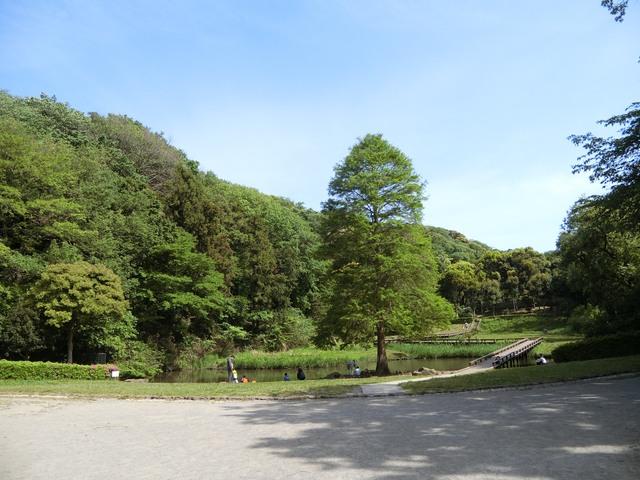 f:id:suijun-hibisukusu:20210505224117j:plain