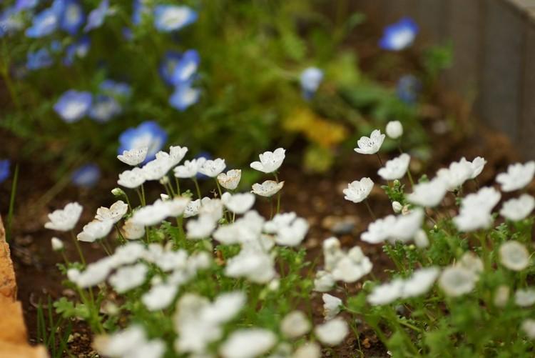 f:id:suikan:20080420112903j:image