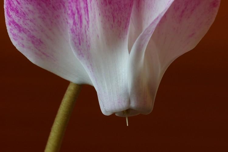 f:id:suikan:20100124092707j:image