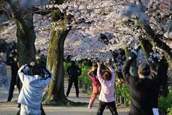 桜の花の下でラジオ体操をする人たちの後ろ姿が見える。