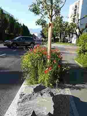 街路樹の足元に菜の花や赤い花が咲いている。