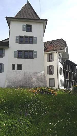 ヨーロッパの古い建物の前の芝生に草がぼうぼうに生えている