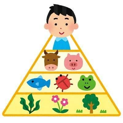 ピラミッド型の食物連鎖のイラスト。一番上に人間の男性のイラスト。