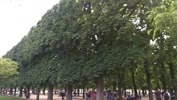 美しく刈り込まれた美しい木々が立ち並ぶ公園