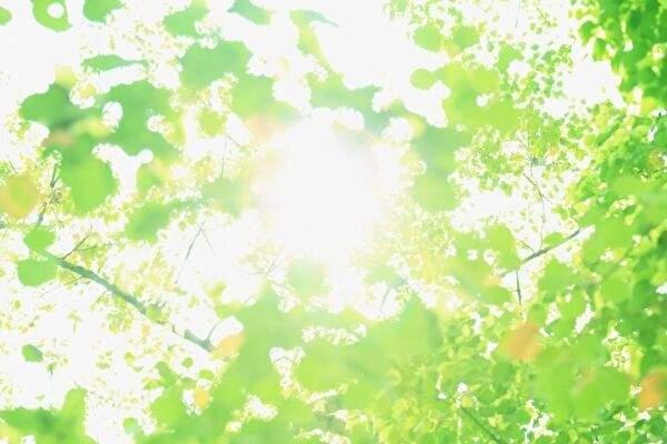 画面いっぱいに明るい新緑の木漏れ日がひろがっている