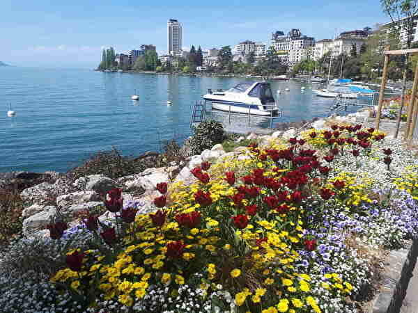 モントルーの湖畔の花壇。背景にモントルーの港や建物が見える。