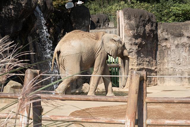 家族で多摩動物公園