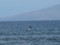 ラハイナのビーチ@マウイ