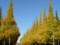 神宮外苑絵画館前のいちょう並木'2008