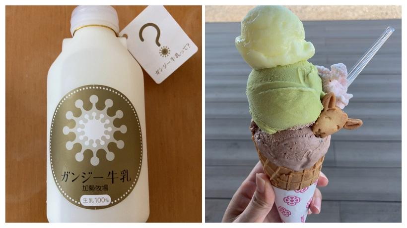 貴重なガンジー牛乳を使ったアイスやソフトクリームが人気【加勢牧場わしま本店】