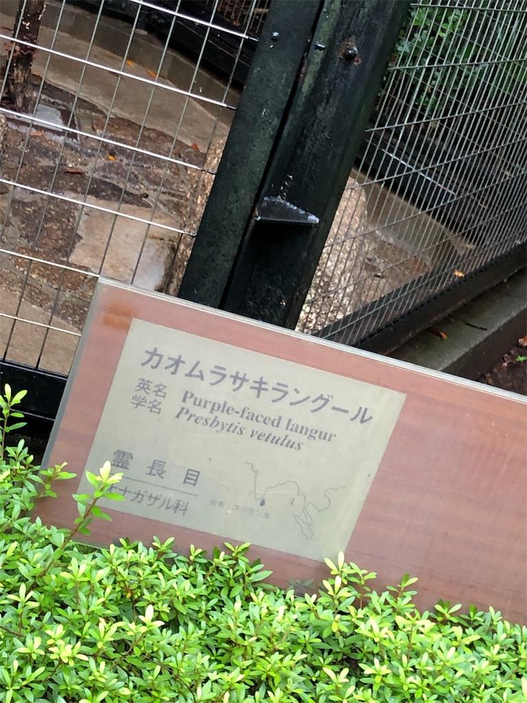 f:id:sukonishiki:20190817215903j:image