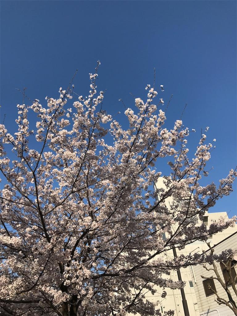 f:id:sukosimo_samuku_nice:20180330220152j:image