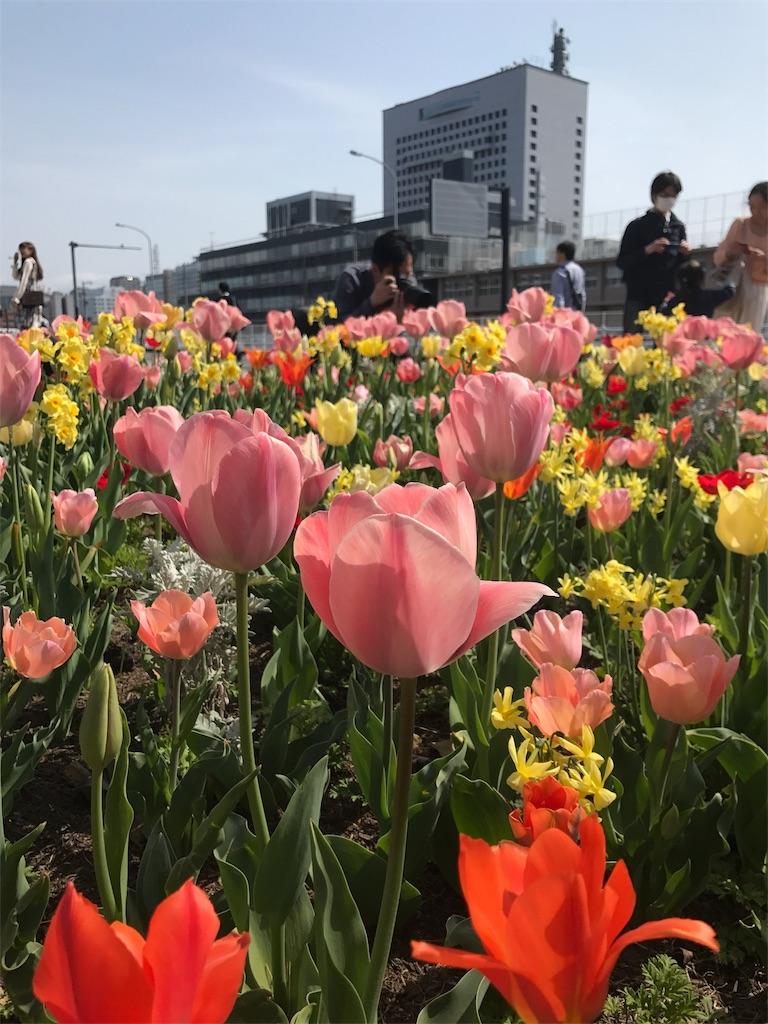 f:id:sukosimo_samuku_nice:20180401201538j:image
