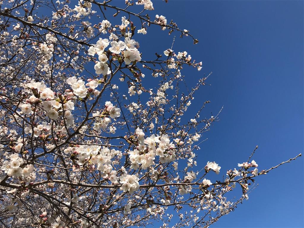 f:id:sukosimo_samuku_nice:20200326021520j:image