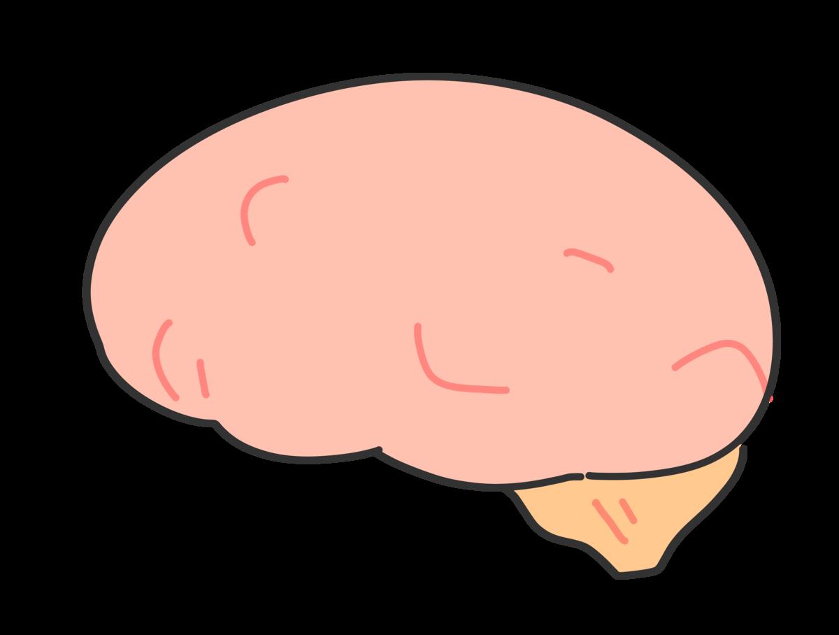 脳のかわいいイラスト