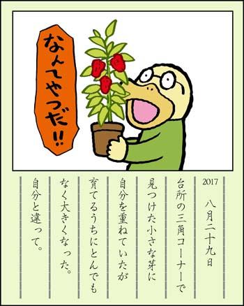 f:id:sukoyakagamo:20170831083151j:plain