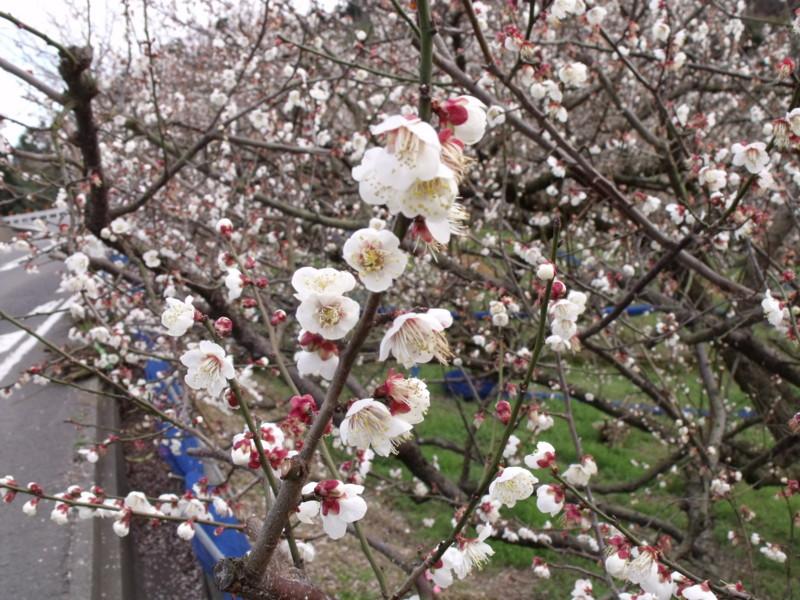 f:id:sukusuku_333:20100213155949j:image