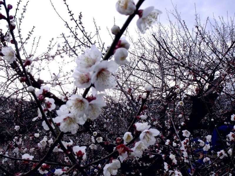 f:id:sukusuku_333:20110127172033j:image