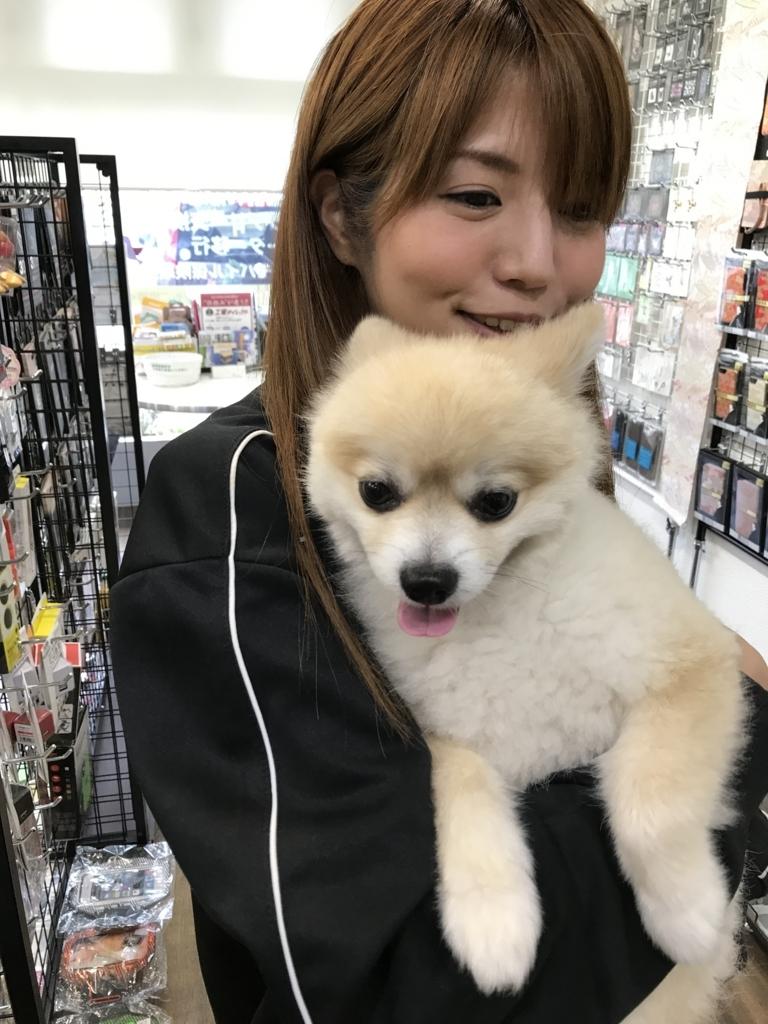 f:id:sumahodou-ichihara:20170908202613j:plain