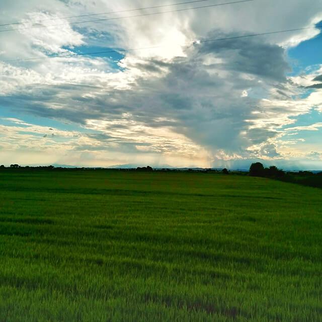ヴェルチェッリ県南部の水田地帯