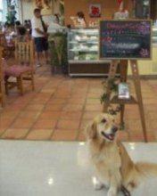 2006.8.27ドギーズカフェ