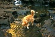 2006.12.2養老渓谷の川を渡るアポロ