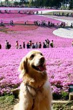 2007.4.29羊山公園