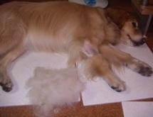 2007.7.4ピロコームで取れた毛