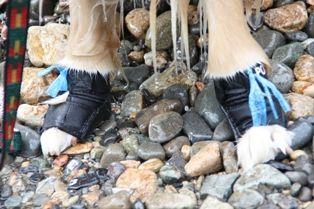 [2008.8.25アポロの靴]