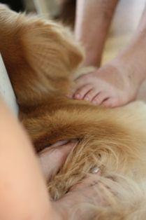 [2008.9.7足犬]