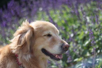 [2008.9.10花の美術館紫の]
