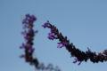 2008.10.28花の美術館紫の花1