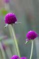 2008.10.28花の美術館紫の花3