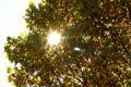2008.11.22昭和記念公園1