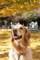 2008.11.22昭和記念公園2
