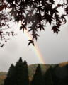 2008.11.29養老渓谷の虹