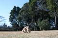 2008.12.7泉自然公園