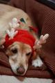 2008.12.18クリスマス撮影会2